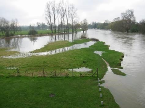 Wetland ecosystem 2